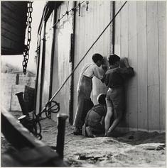 La curiosidad ca.1950. Francesc Catala Roca