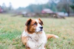 © Kirstie Marie Photography | Daily Dog Tag | Handsome Dog