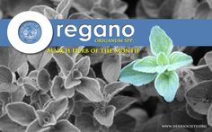 HSA's Herb of the Month for March 2014