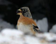 madárfotó - birds photography