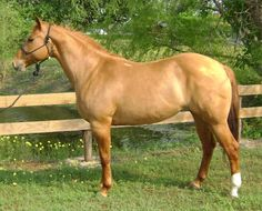 the most butiful horse on EARTH!!!!   so pritty so so oh.