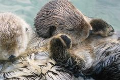 I DON'T CARE I LOVE THE CRITTERS ANYWAY!  Animals can be giant jerks   I Fucking Love Science http://www.iflscience.com/plants-and-animals/animals-can-be-giant-jerks