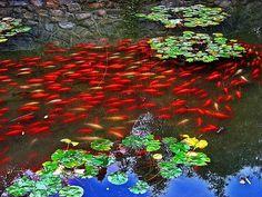 Nature, nature, nature. red
