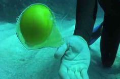 When You Crack An Egg Underwater, Strange Things Happen