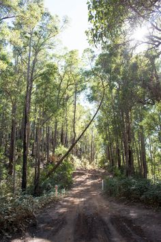 """L1M1AP1:  """"You Can Go Your Own Way"""". 4WD tracks through the forrest near Dwellingup WA.   Shot with my Nikon D5200.  No edit in Lightroom."""
