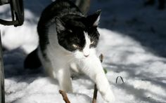 Best winter wallpaper, desktop background for any computer, laptop, tablet and phone Winter Wallpaper Hd, 480x800 Wallpaper, Cold Feet, Asus Zenfone, Hd Backgrounds, Snow, Black And White, Animals, Tuxedo Cats