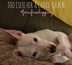 Rubicon Days: Be the Change for Animals: Making the Decision to Shop Force-Free