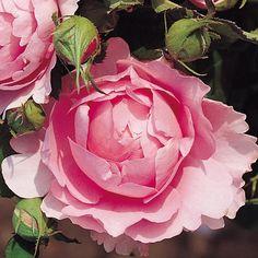 rosier-Chantal-Merieux