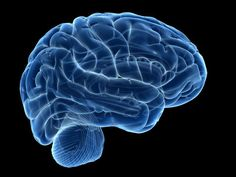 What Are the 13 Main Branches of Psychology?: Biopsychology