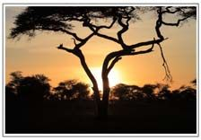 Wonderful travel places in Tanzania include wildlife safaris and kilimanjaro trekking adventures
