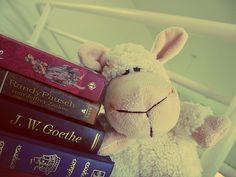 Livros e uma fofura.