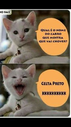 68 Ideas Funny Puns Humor Hilarious Faces For 2019 Gato Do Face, Funny Puns, Hilarious, Funny Stuff, Funny Humor, Cat Memes, Funny Photos, Funny Animals, Instagram