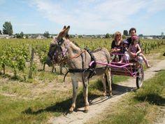 Séjour âne et famille, j'offre : http://www.web-commercant.fr/cheques/hebergement/restigne-37140/les-vignes-roses/2084-sejour-ane-et-famille