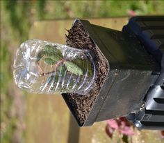 Gardening Roses Growing Roses from Rose clippings. Using a water bottle as a little greenhouse to root rose cuttings. Amazing Gardens, Beautiful Gardens, Beautiful Flowers, Farm Gardens, Outdoor Gardens, House Gardens, Garden Seeds, Garden Plants, Lawn And Garden