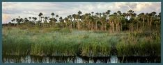 I have a slight concern about being eaten by something, but I would love to tour the Florida Everglades...