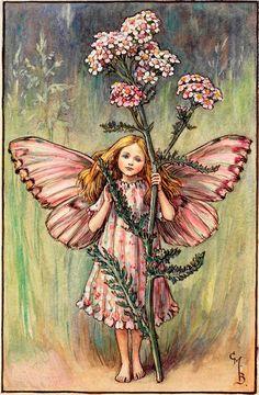 The Yarrow Fairy by Cicely Mary Barker