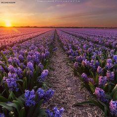 _______________________________________________  @ig_discover_holland  Present our artist : @dennisartphotography  Noordwijkerhout ______________  Note:  Een gemoedelijk  gastvrij en gezellig dorp in het hart van de Bollenstreek. In ons dorp is van alles te zien en te beleven het hele jaar door. In het voorjaar is het genieten van de prachtig kleurende en heerlijk geurende bloeiende bloemen  en alle gezelligheid rondom het bloemencorso!  Tijdens de zomer bruist Noordwijkerhout.  Het 'Hart…