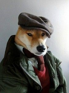 Menswear Dog Features Photos of Men's Fashion, Modeled by a Shiba Inu Shiba Inu, Akita Dog, Menswear Dog, Stylish Menswear, Funny Animals, Cute Animals, Doge Meme, Memes Of The Day, Dog Dresses