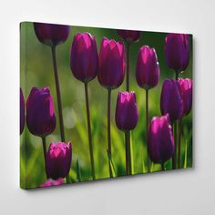 Canvasprints.io | Fresh Purple Tulips - #canvasprintsio - Low cost, high quality canvas prints made in London UK from just £13.99. You're sure to find inspiration in our collection. Ask about our photo to canvas option too, it's super simple. Canvas prints on wall / flower and floral canvas art