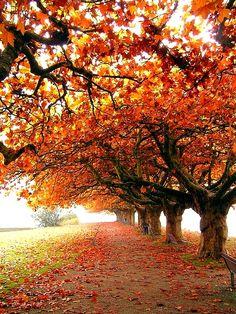 Eu amo natureza!