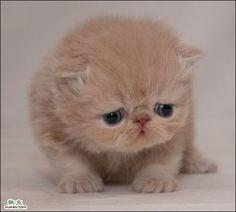 Cute Kitty Thread