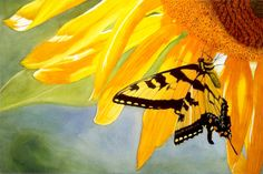 Yellow Butterfly Art Watercolor Painting Print by Cathy Hillegas, 7x10, Sunflower Art, Tiger Swallowtail, yellow black orange green blue