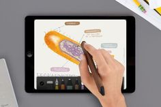 The Best iPad Sketch App, Paper, Is Now Completely Free | Co.Design | business + design