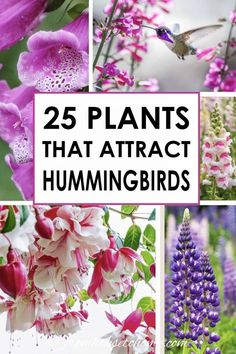 I love these hummingbird plants! So many flowers to choose from that will bloom in spring, summer and fall in my hummingbird garden landscape. Find out which flowers will attract hummingbirds in your garden. Ivy Plants, Shade Plants, Cool Plants, Flowering Plants, Shade Perennials, Flowers Perennials, Planting Flowers, How To Plant Flowers, Draw Flowers