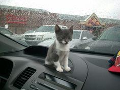 Garmin Releases Global Positioning Kitten