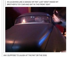 Which is funnier?:   32 Of The Greatest Things That Have Ever Happened On Tumblr
