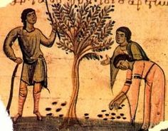 Olive Oil is the main health-promoting component of the Mediterranean diet thanks to its organoleptic characteristics and nutritional composition. Olive Oil Image, Refined Olive Oil, Ancient Olympics, Greek History, Olive Tree, Ancient Greece, Ancient Art, In Kindergarten, Drawings