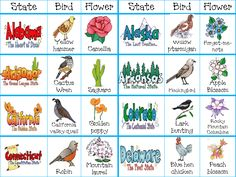 WOW! Here's a series of state cards that includes the state name, bird, and flower.