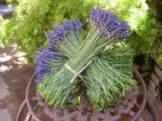 Biggs, CA.  Organic Lavender