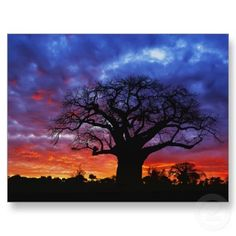 African Baobab Tree (Adansonia Digitata) Silhouetted at Sunset, Tarangire National Park, Tanzania Photographic Print Le Baobab, Baobab Tree, Baobab Oil, Beautiful Sky, Beautiful World, Beautiful Places, Amazing Places, Mother Earth, Mother Nature