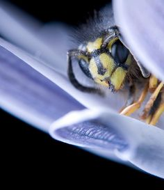 The cutest picture of an insect EVAR!