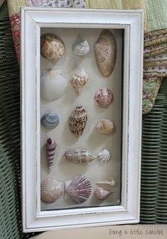 Something to do with all those collected shells and sand dollars