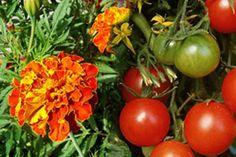 Sinkaliergia Greek Flowers, Plant Catalogs, Flowering Trees, Flora, Vegetables, Plants, Forests, Gardening, Mountains