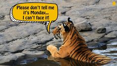 Monday morning blues in the jungle :)