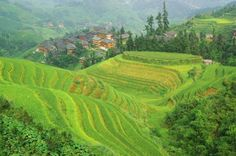 China's Dwarf Village - Scientists and experts are extremely interested in the inhabitants of Yangsi, situated in the Sichuan Province. The reason? Not only are there only 80 residents in the village, but almost half of them are dwarfs.