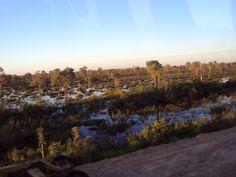 Planicie alagada Pantanal - Brasil foto: Kp