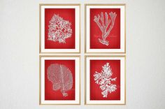 Red Coral Red Sea Coral Print Red Seaweed by BeachHouseGallery