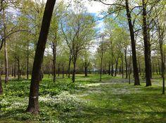 新緑十勝 5月の中頃 新しい季節のスタートです