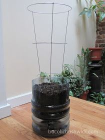 DIY Self Watering Container from a 5 Gallon Water Cooler Bottle I have like 30 in garage Self Watering Bottle, Diy Self Watering Planter, Self Watering Containers, Watering Plants, Water Containers, Container Vegetables, Container Gardening, Vegetable Gardening, Veggie Gardens