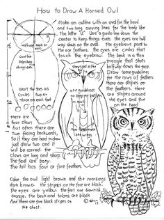 How to Draw a Horned Owl Worksheet and Lesson. read the lesson at the blog. http://drawinglessonsfortheyoungartist.blogspot.com/2013/01/how-to-draw-horned-owl-worksheet-and.html