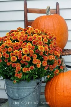 The Charm of Home: Fall Front Porch MUMS IN BUCKET. Meredeth, this is what fall ( autumn) looks like decorated outside your front door. Autumn Decorating, Porch Decorating, Decorating Ideas, Fall Home Decor, Autumn Home, Fall Inspiration, Deco Originale, Garden Care, Fall Harvest