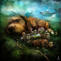 alexander jansson: Sleeping Dogs