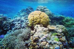Somewhere in Great Barrier Reef. It was the first time I saw real life coral reef in the sea. IT IS ABSOLUTELY STUNNING!! Simply like swimming under a huge swimming pool with coral. It must be one of the moment I will never never forget!  #咁至係冇得輸 #cairns #greatbarrierreef #coral #reef #diving #scubadiving #snorkeling #blue #oceanblue #australia #quicksilver #gopro #workingholiday #queensland by matthew.soso http://ift.tt/1UokkV2