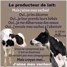 """Résultat de recherche d'images pour """"vaches conduites à l'abattoir """""""