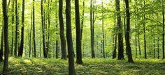 Rural Forest - Fototapeter & Tapeter - Photowall
