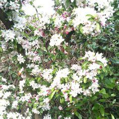wit in de tuin